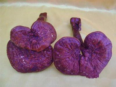 紫灵芝的功效 紫灵芝的4大好处