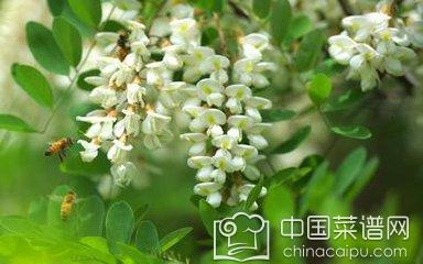 槐米的功效与作用 这物竟然能够治疗高血压