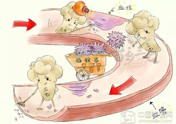 血管清道夫的中药 五种中药有效清除血管垃圾